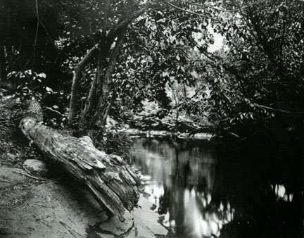 Muskrat Cove, Bronx, NY (11 x 14 Tintype) by N.W. Gibbons