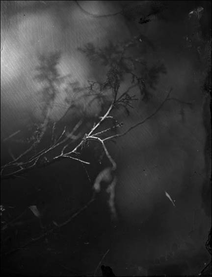 Ambrotype by Bryan Hiott (2007)