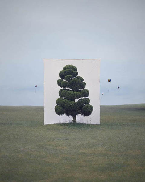 Tree #2, Archival Inkjet Print by Myoung Ho Lee (2006)