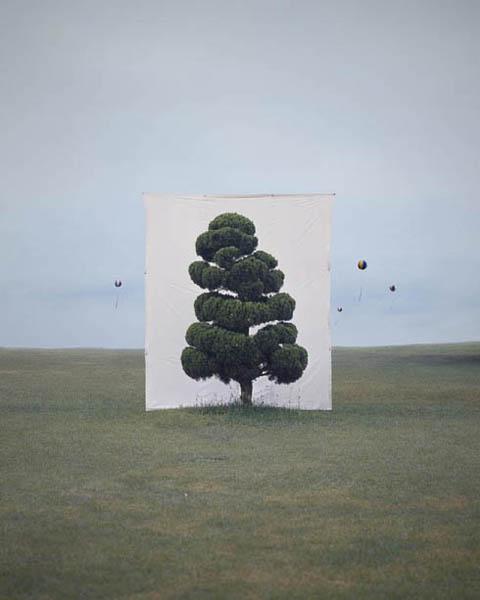 Tree #2, Archival Inkjet Print by Myoung Ho Lee (2006)