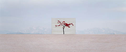 Tree #5, Archival Inkjet Print by Myoung Ho Lee (2007)