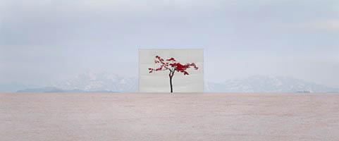 Tree #5, Archival Inkjet Print by Myoung Ho Lee (2007)