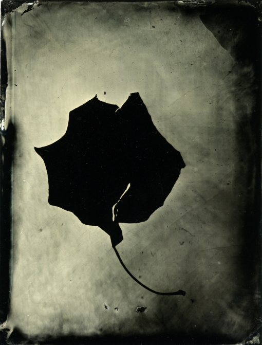 Tintype Photogram