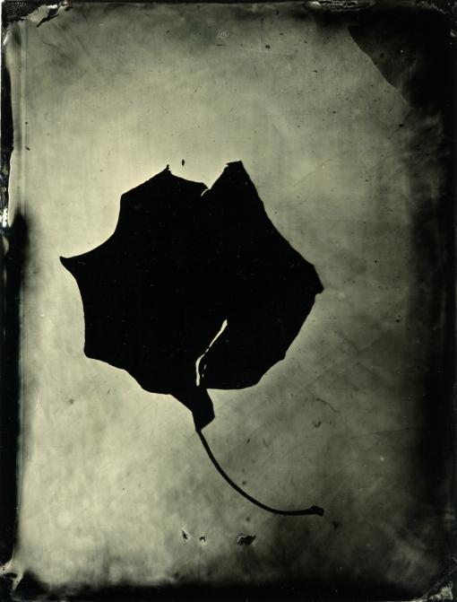 Tintype Photogram