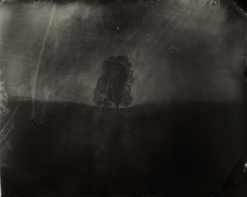 sally_mann_last_measure_01_0